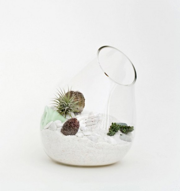 decorative ocean terrarium decor