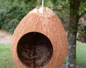 contemporary coconut bird house images