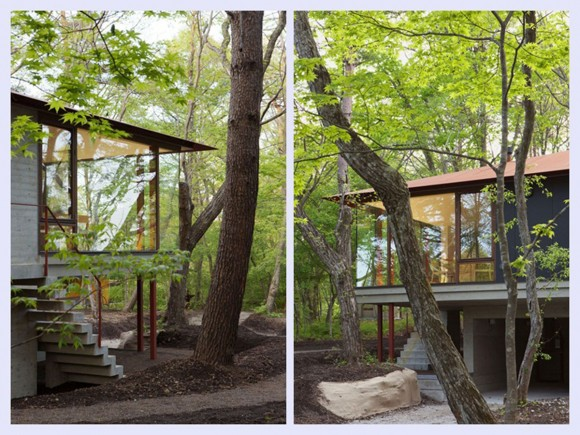 sustainable forest house designs