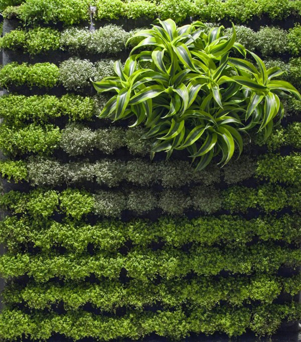 Applicative Green Wall Garden Designs - Iroonie.