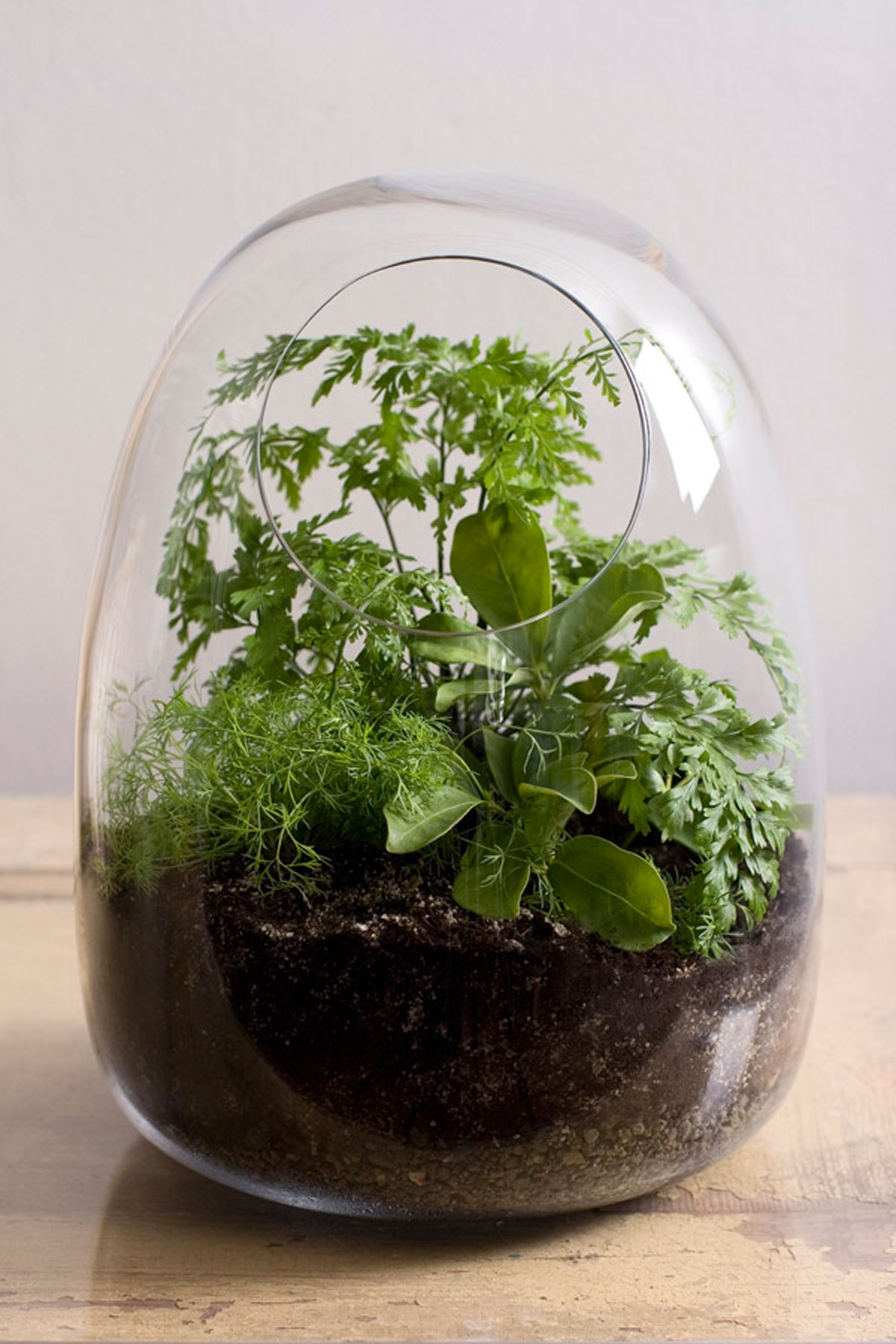 green home indoor glass planters