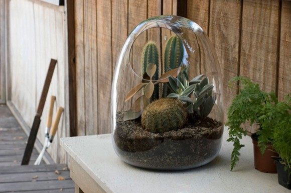 small cute terrarium ideas
