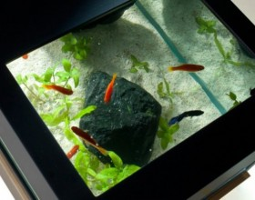 tranquil aquarium designs pictures