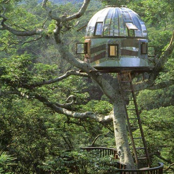 Have You Lived in a Tree House Lately(4)